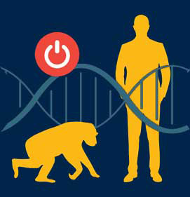 January 2020 vector art explaining how human, primate and rat DNA gene sequences differ in terms of species development.